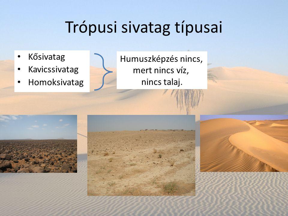 Trópusi sivatag típusai