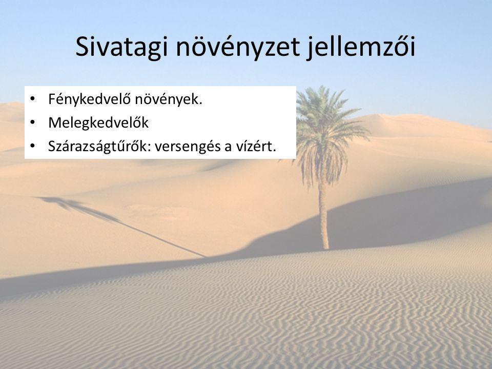 Sivatagi növényzet jellemzői