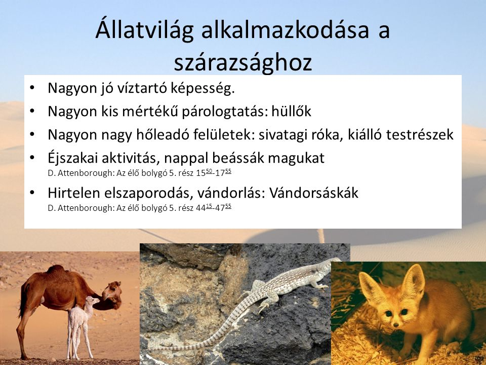 Állatvilág alkalmazkodása a szárazsághoz