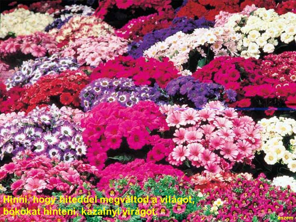 Hinni, hogy hiteddel megváltod a világot, bókokat hinteni, kazalnyi virágot.