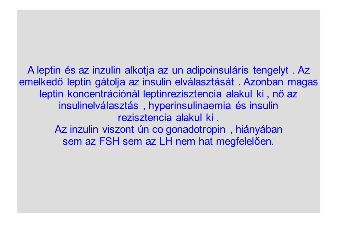 insulinelválasztás , hyperinsulinaemia és insulin