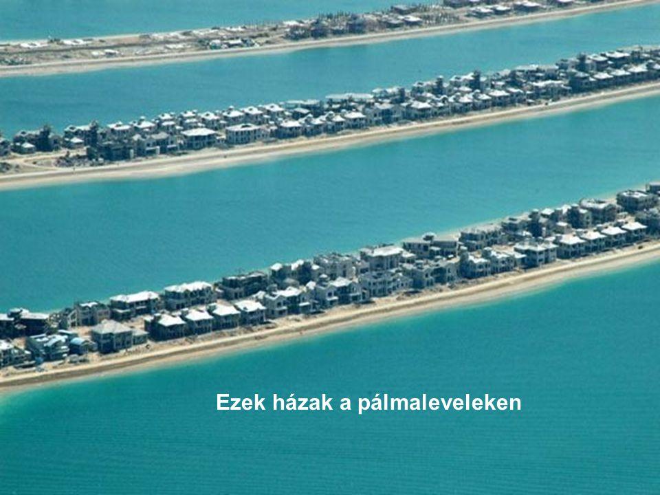 Ezek házak a pálmaleveleken