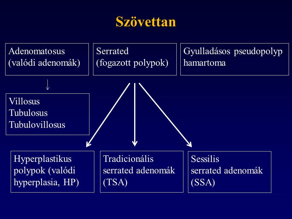 Szövettan Adenomatosus (valódi adenomák) Serrated (fogazott polypok)