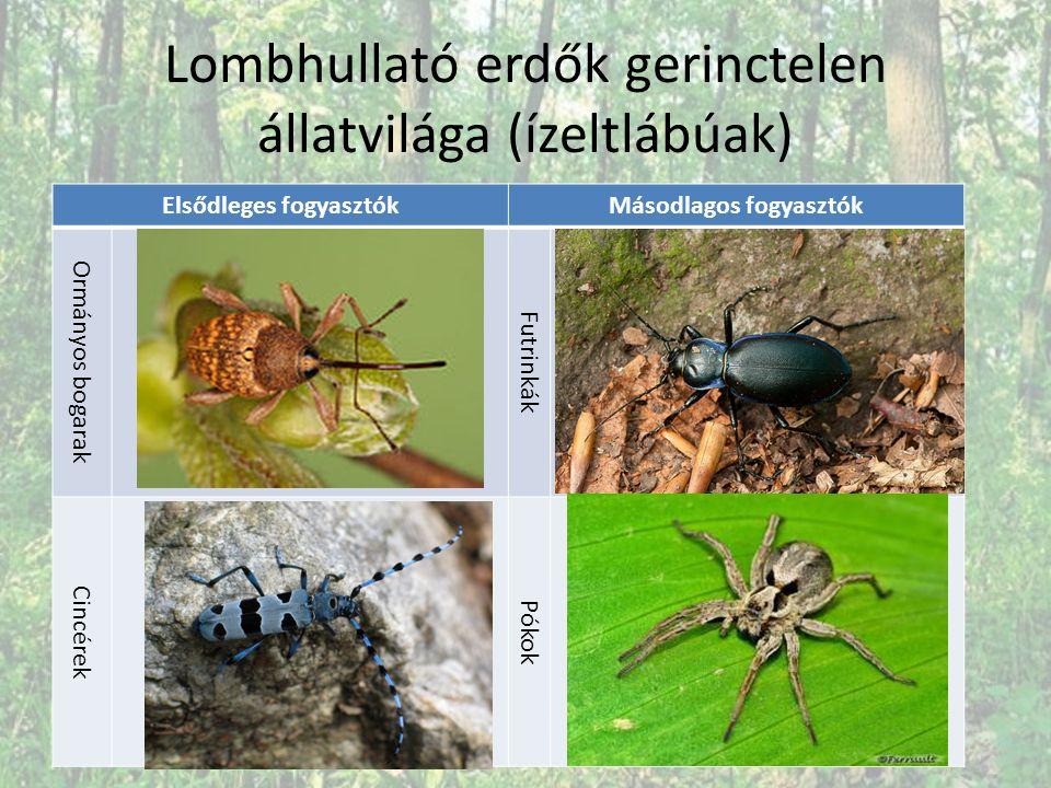 Lombhullató erdők gerinctelen állatvilága (ízeltlábúak)