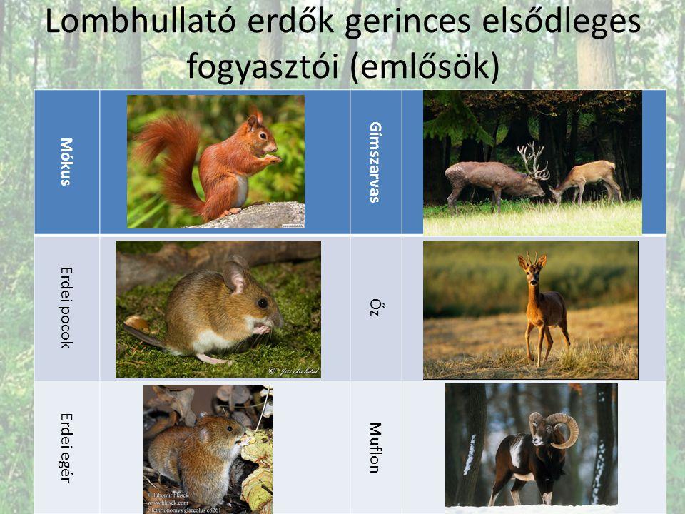 Lombhullató erdők gerinces elsődleges fogyasztói (emlősök)