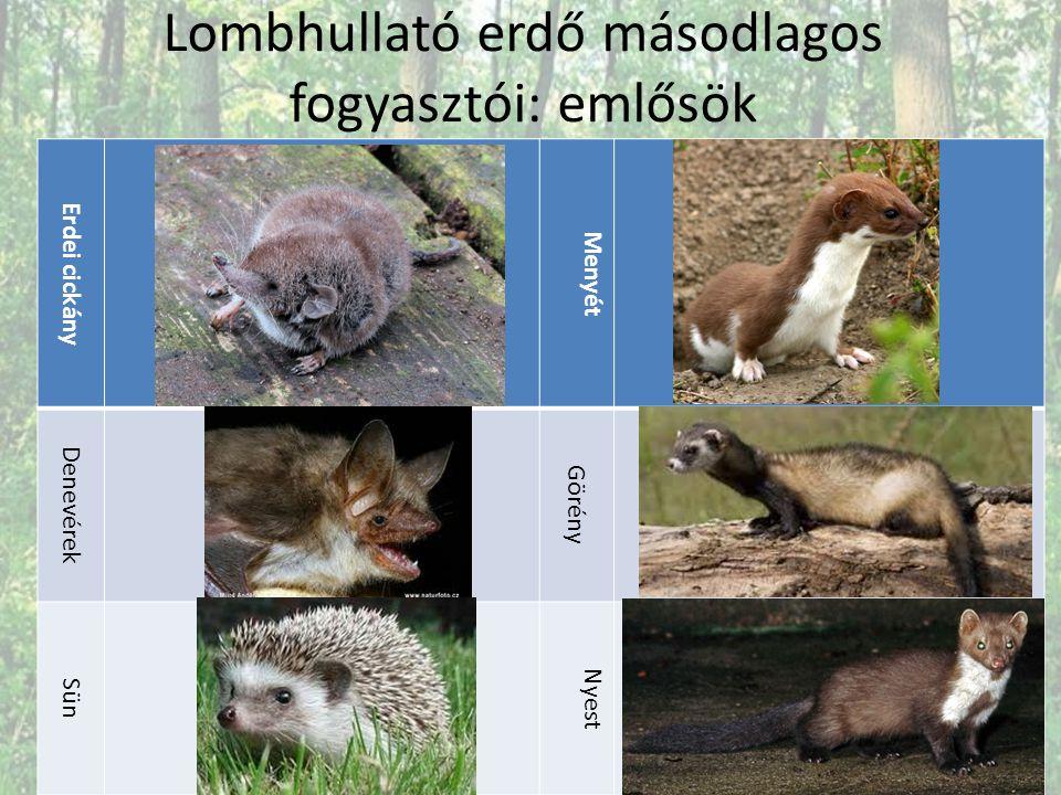 Lombhullató erdő másodlagos fogyasztói: emlősök