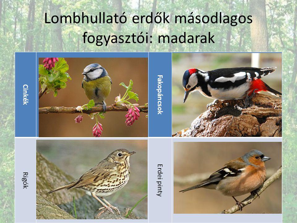 Lombhullató erdők másodlagos fogyasztói: madarak