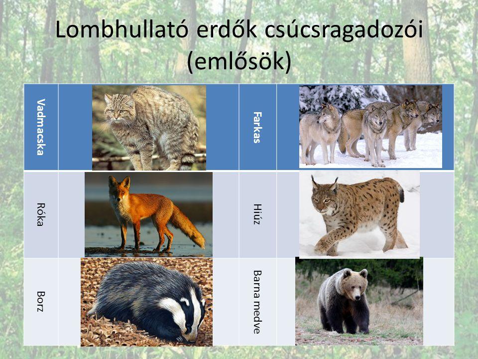 Lombhullató erdők csúcsragadozói (emlősök)
