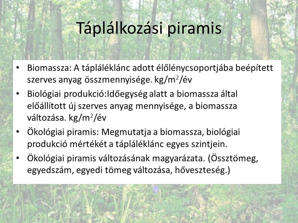 Táplálkozási piramis Biomassza: A tápláléklánc adott élőlénycsoportjába beépített szerves anyag összmennyisége. kg/m2/év.