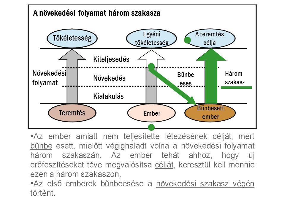 A növekedési folyamat három szakasza
