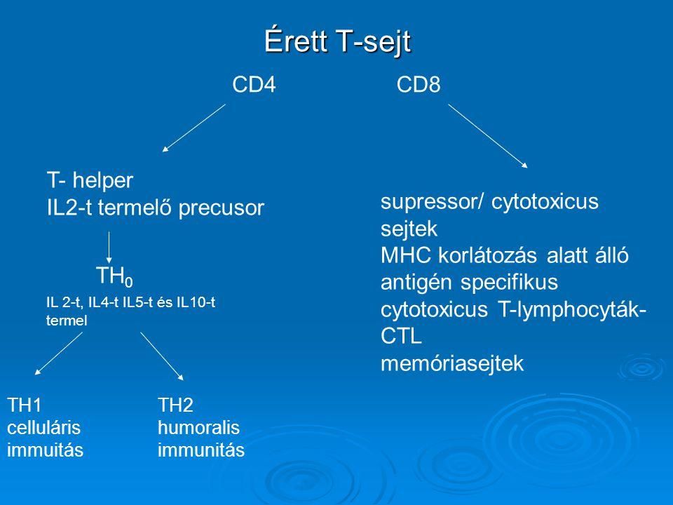 Érett T-sejt CD4 CD8 T- helper IL2-t termelő precusor