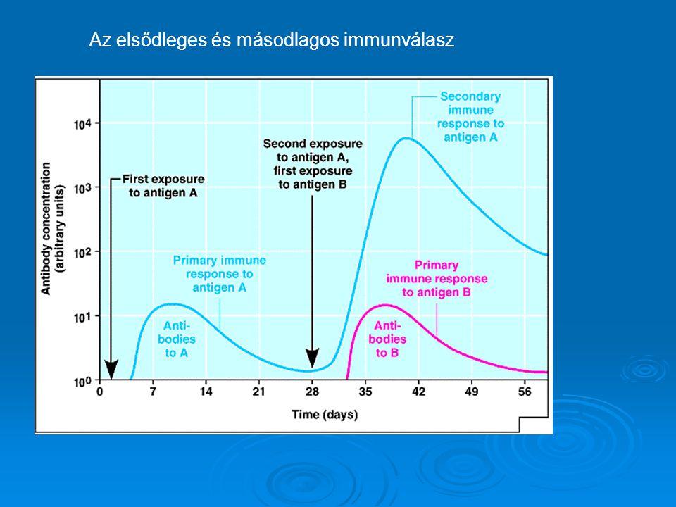 Az elsődleges és másodlagos immunválasz