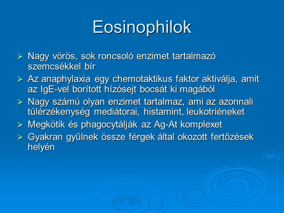 Eosinophilok Nagy vörös, sok roncsoló enzimet tartalmazó szemcsékkel bír.