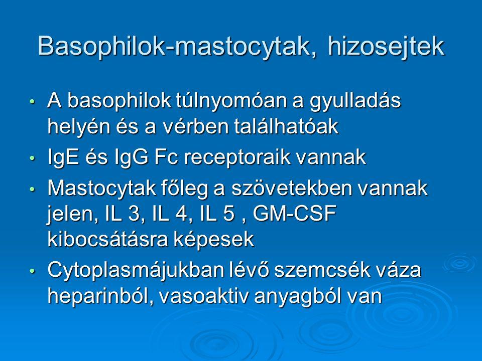 Basophilok-mastocytak, hizosejtek