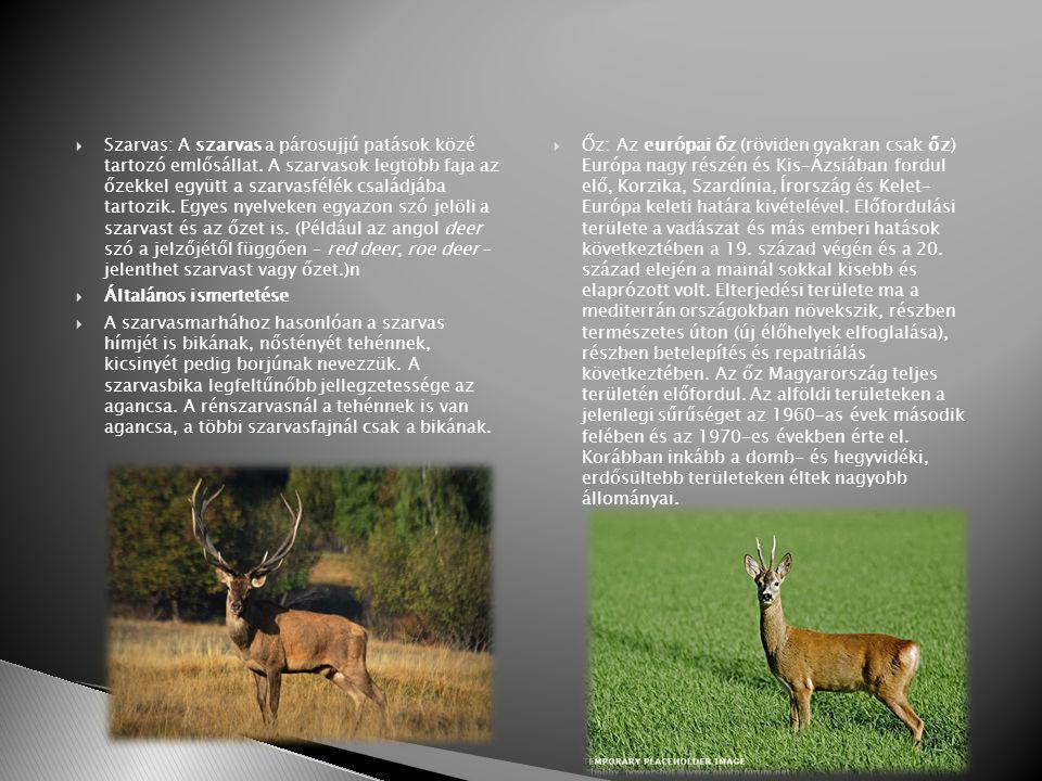 Szarvas: A szarvas a párosujjú patások közé tartozó emlősállat