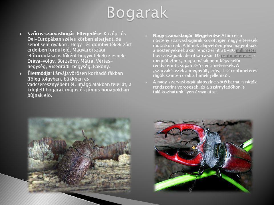 Bogarak