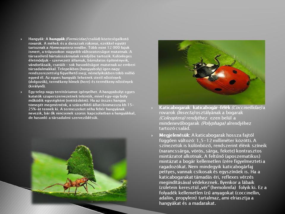 Hangyák: A hangyák (Formicidae) család) közösségalkotó rovarok