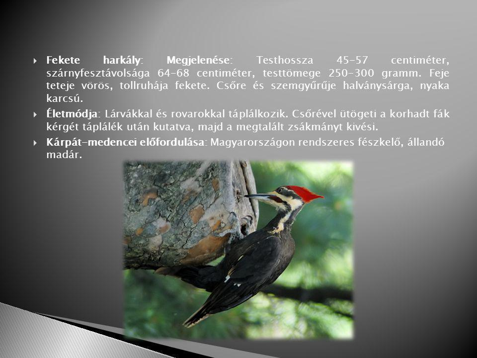 Fekete harkály: Megjelenése: Testhossza 45-57 centiméter, szárnyfesztávolsága 64-68 centiméter, testtömege 250-300 gramm. Feje teteje vörös, tollruhája fekete. Csőre és szemgyűrűje halványsárga, nyaka karcsú.