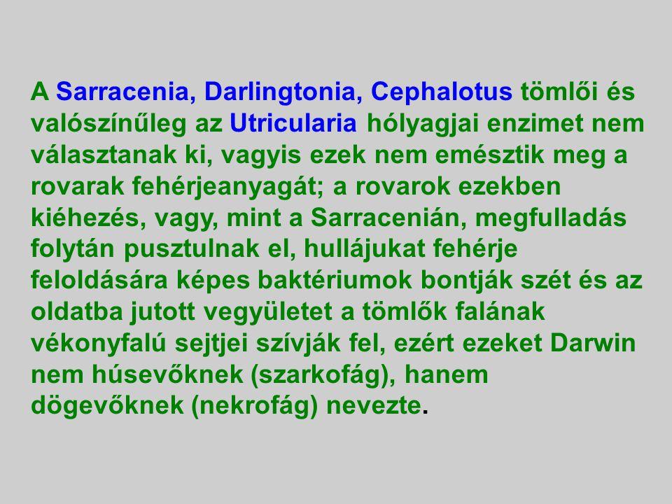 A Sarracenia, Darlingtonia, Cephalotus tömlői és valószínűleg az Utricularia hólyagjai enzimet nem választanak ki, vagyis ezek nem emésztik meg a rovarak fehérjeanyagát; a rovarok ezekben kiéhezés, vagy, mint a Sarracenián, megfulladás folytán pusztulnak el, hullájukat fehérje feloldására képes baktériumok bontják szét és az oldatba jutott vegyületet a tömlők falának vékonyfalú sejtjei szívják fel, ezért ezeket Darwin nem húsevőknek (szarkofág), hanem dögevőknek (nekrofág) nevezte.