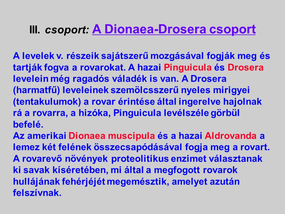 III. csoport: A Dionaea-Drosera csoport