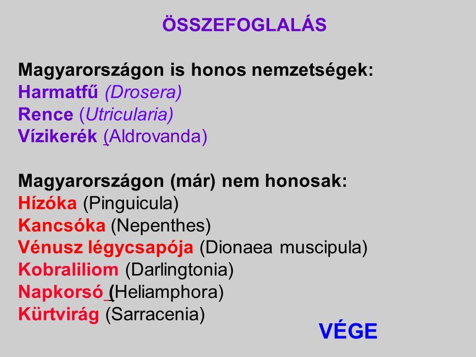 ÖSSZEFOGLALÁS Magyarországon is honos nemzetségek: Harmatfű (Drosera) Rence (Utricularia) Vízikerék (Aldrovanda)