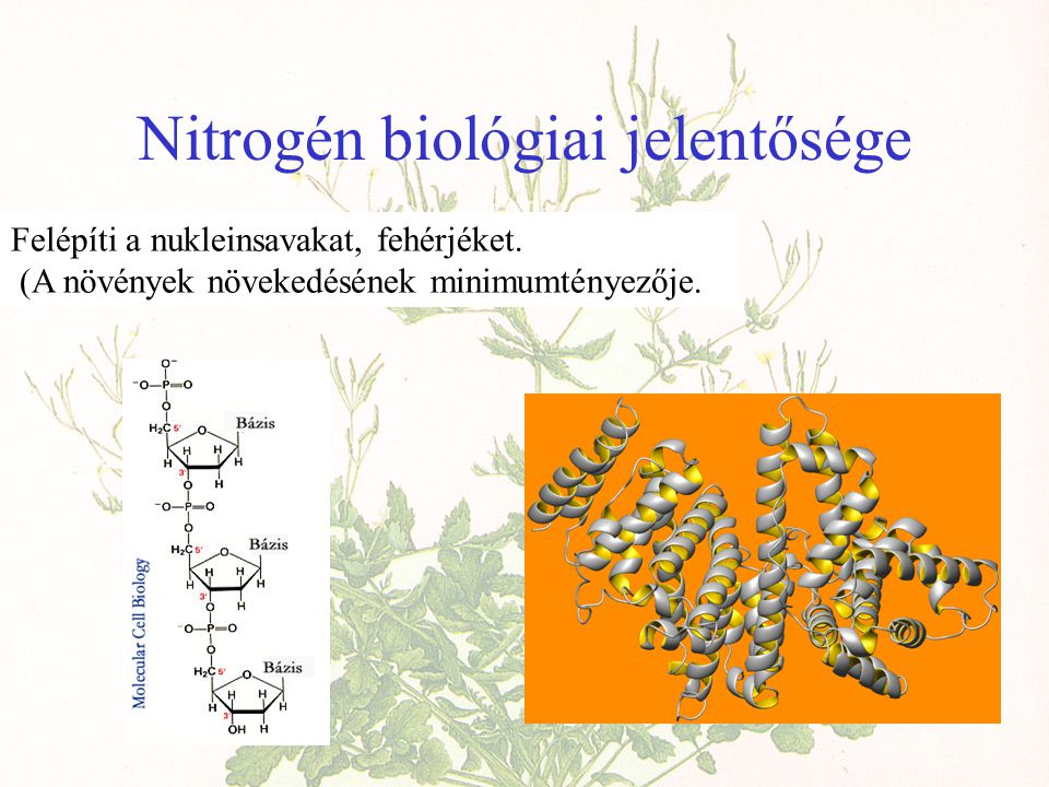 Nitrogén biológiai jelentősége