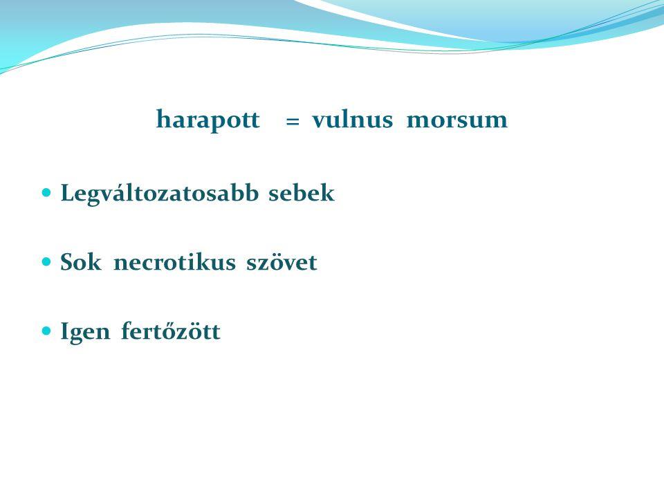 harapott = vulnus morsum