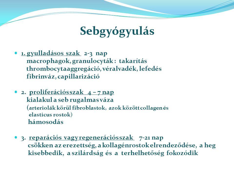 Sebgyógyulás 1. gyulladásos szak 2-3 nap