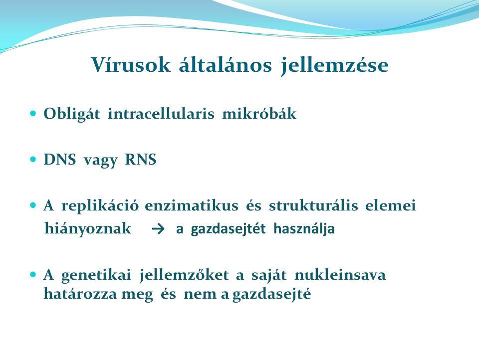 Vírusok általános jellemzése