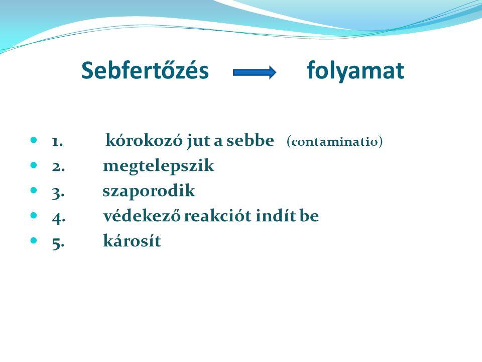 Sebfertőzés folyamat 1. kórokozó jut a sebbe (contaminatio)