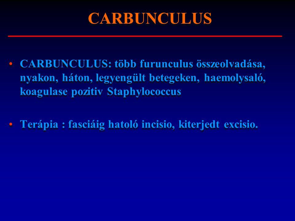CARBUNCULUS CARBUNCULUS: több furunculus összeolvadása, nyakon, háton, legyengült betegeken, haemolysaló, koagulase pozitiv Staphylococcus.