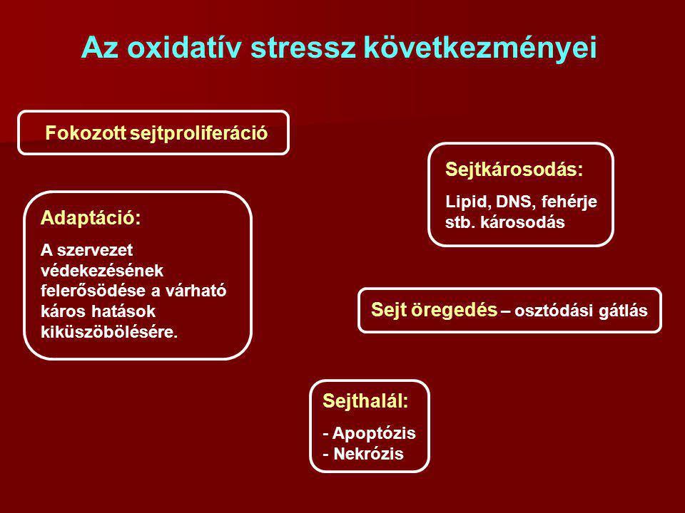 Az oxidatív stressz következményei