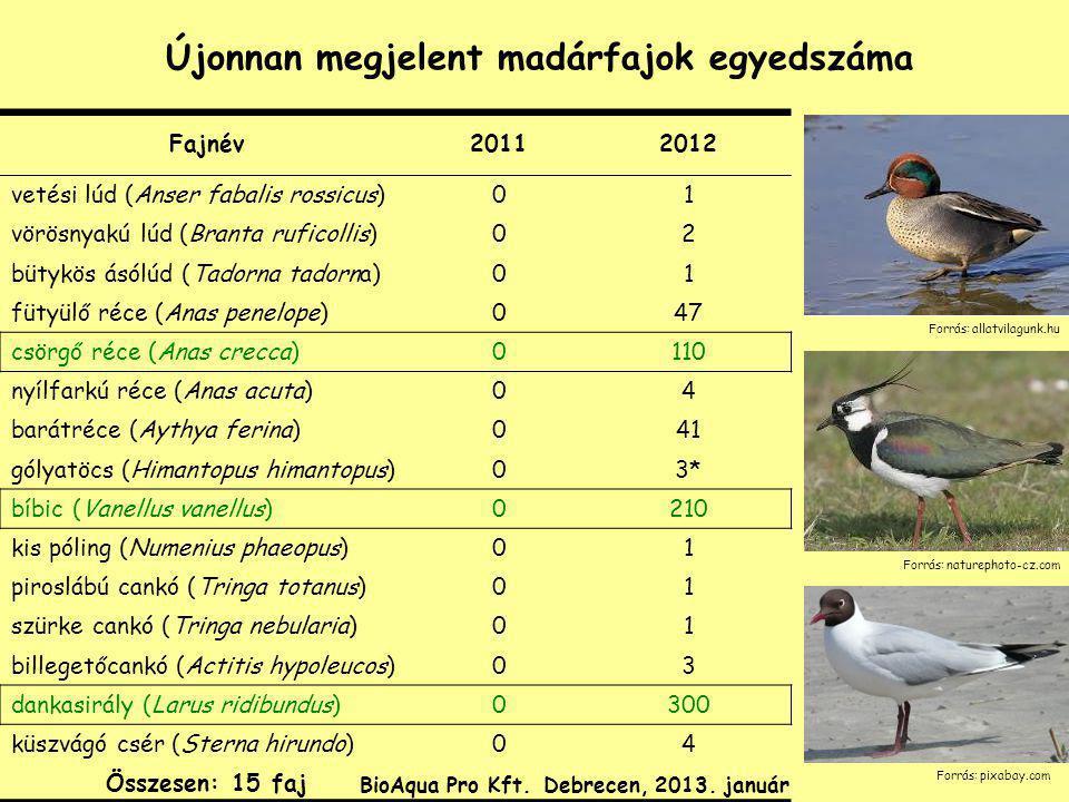 Újonnan megjelent madárfajok egyedszáma