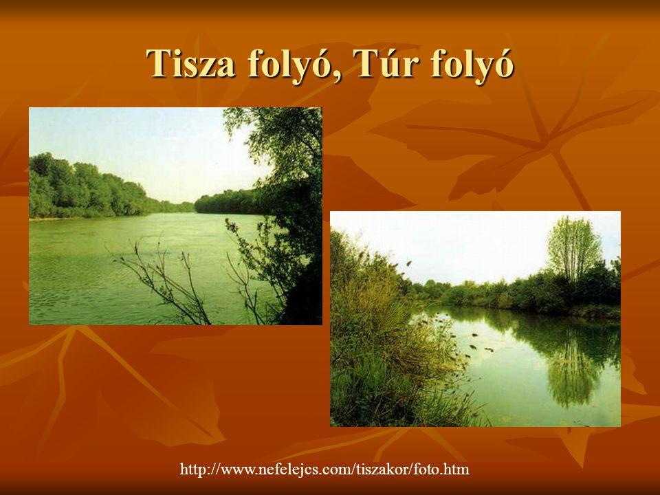 Tisza folyó, Túr folyó http://www.nefelejcs.com/tiszakor/foto.htm