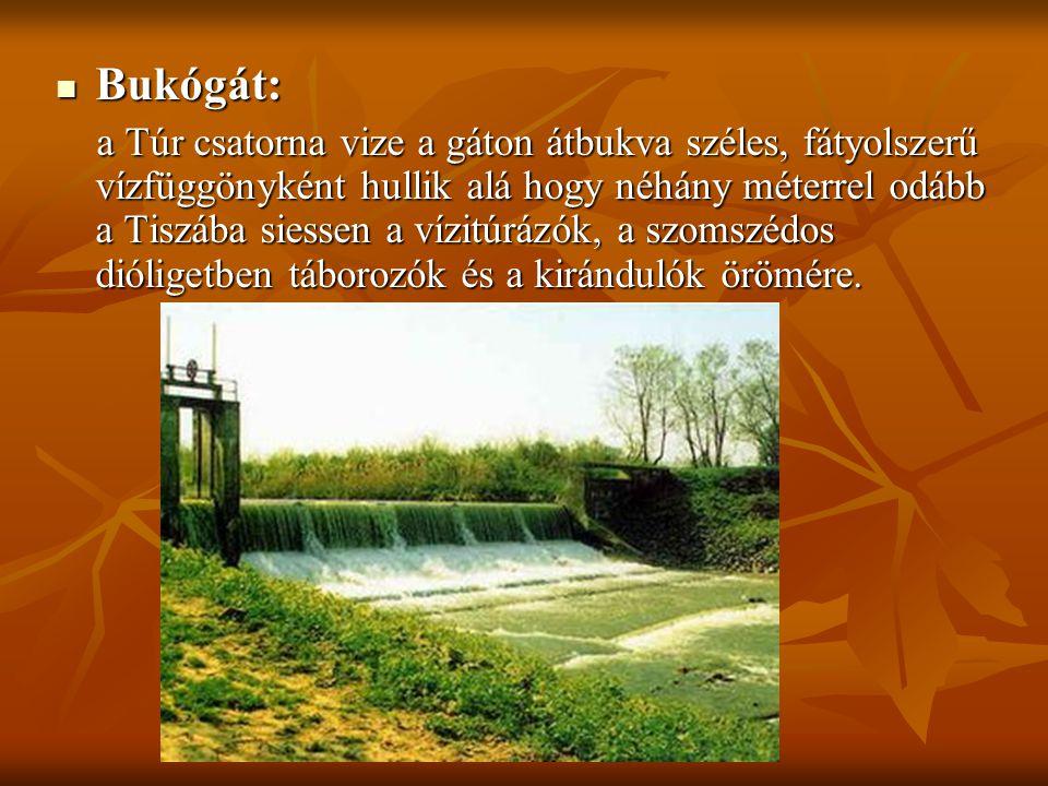 Bukógát: