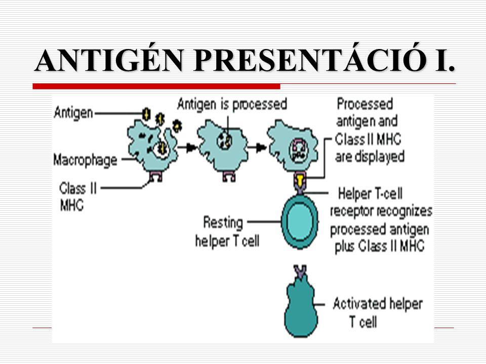 ANTIGÉN PRESENTÁCIÓ I.