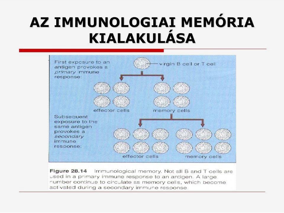 AZ IMMUNOLOGIAI MEMÓRIA KIALAKULÁSA