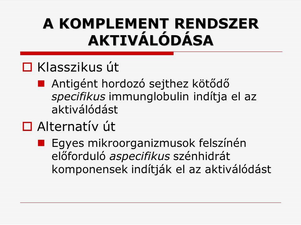 A KOMPLEMENT RENDSZER AKTIVÁLÓDÁSA
