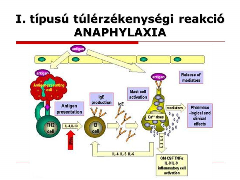 I. típusú túlérzékenységi reakció ANAPHYLAXIA