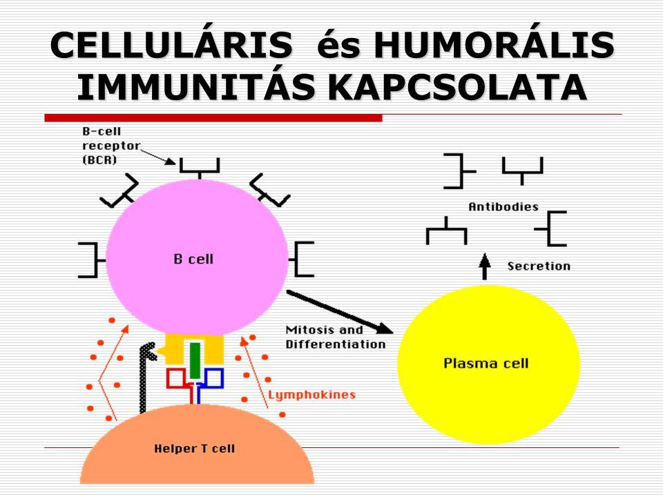 CELLULÁRIS és HUMORÁLIS IMMUNITÁS KAPCSOLATA