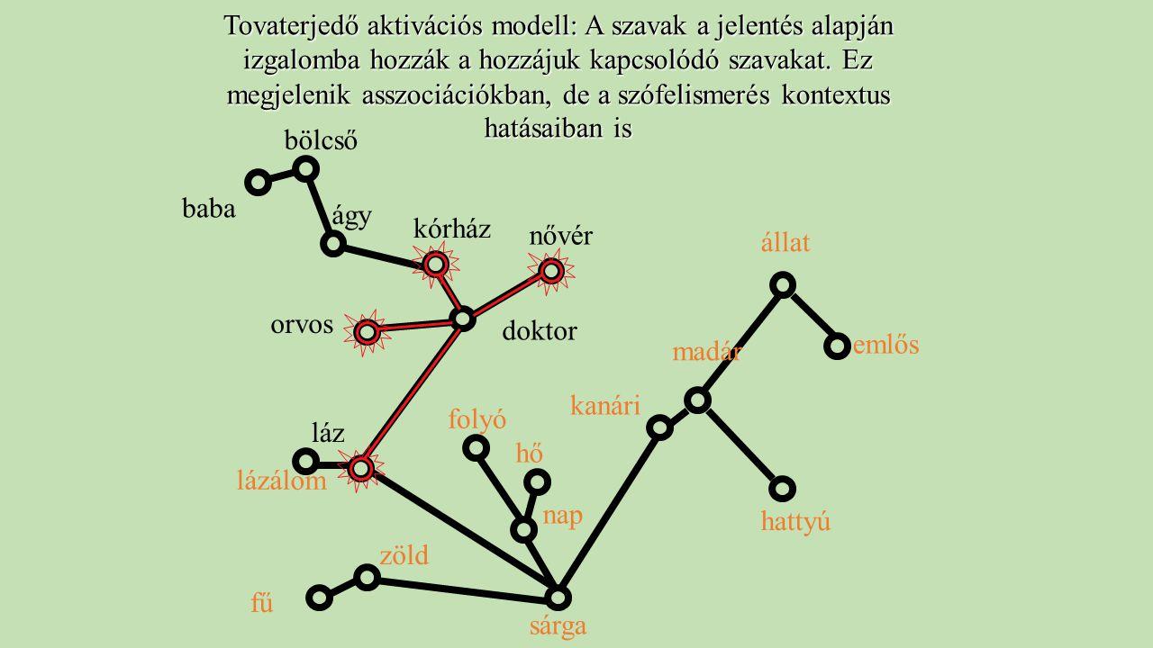 Tovaterjedő aktivációs modell: A szavak a jelentés alapján izgalomba hozzák a hozzájuk kapcsolódó szavakat. Ez megjelenik asszociációkban, de a szófelismerés kontextus hatásaiban is