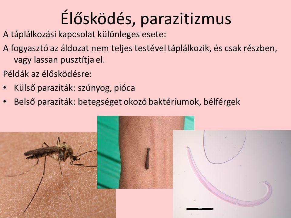 Élősködés, parazitizmus