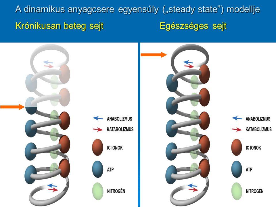 """A dinamikus anyagcsere egyensúly (""""steady state ) modellje Krónikusan beteg sejt Egészséges sejt"""