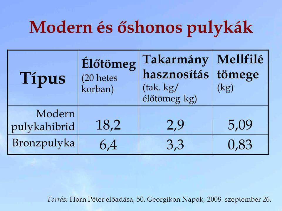 Modern és őshonos pulykák