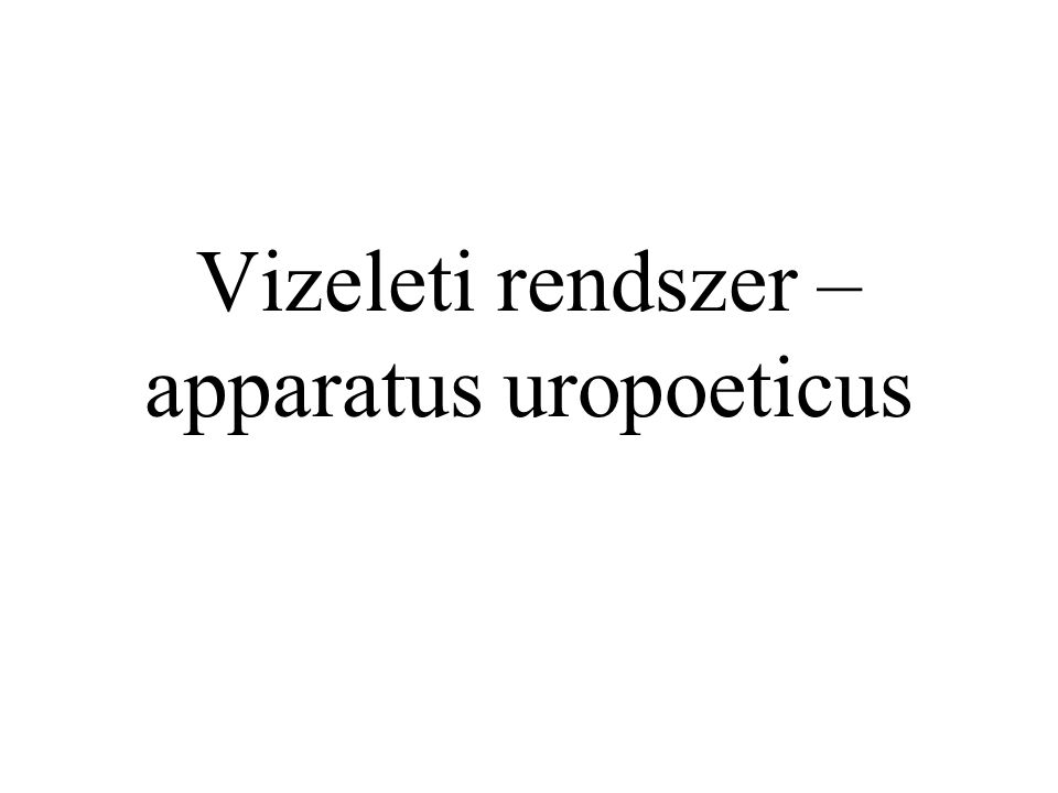 Vizeleti rendszer – apparatus uropoeticus