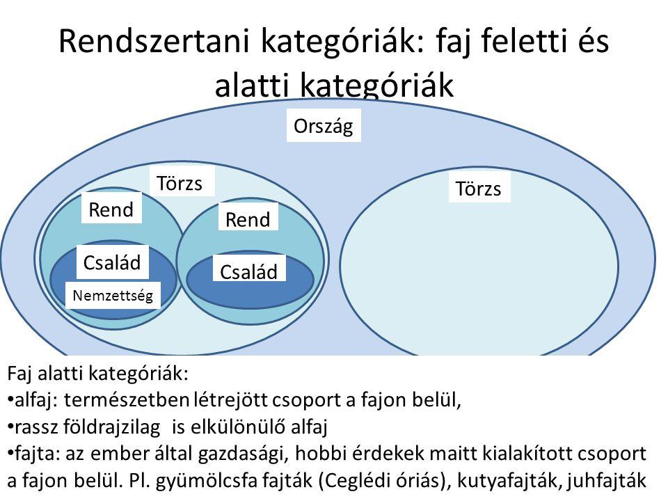 Rendszertani kategóriák: faj feletti és alatti kategóriák