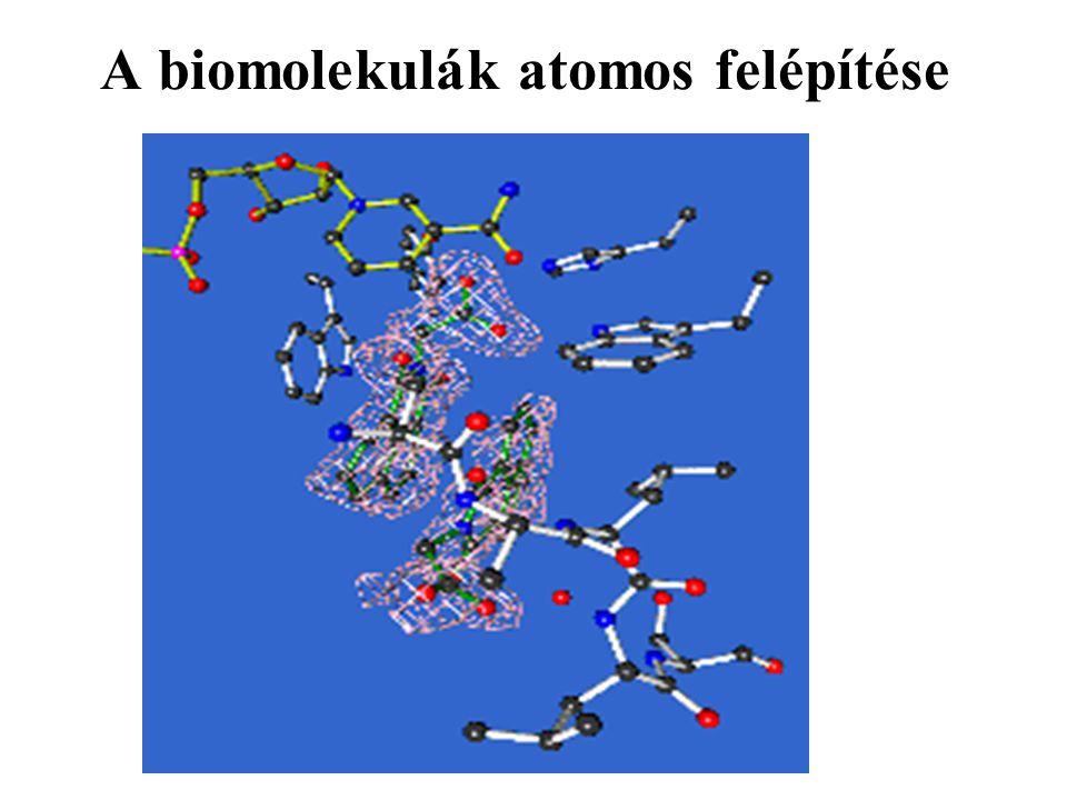 A biomolekulák atomos felépítése