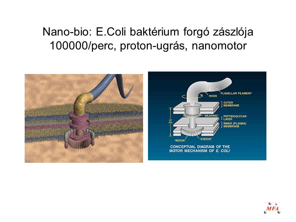 Nano-bio: E.Coli baktérium forgó zászlója 100000/perc, proton-ugrás, nanomotor