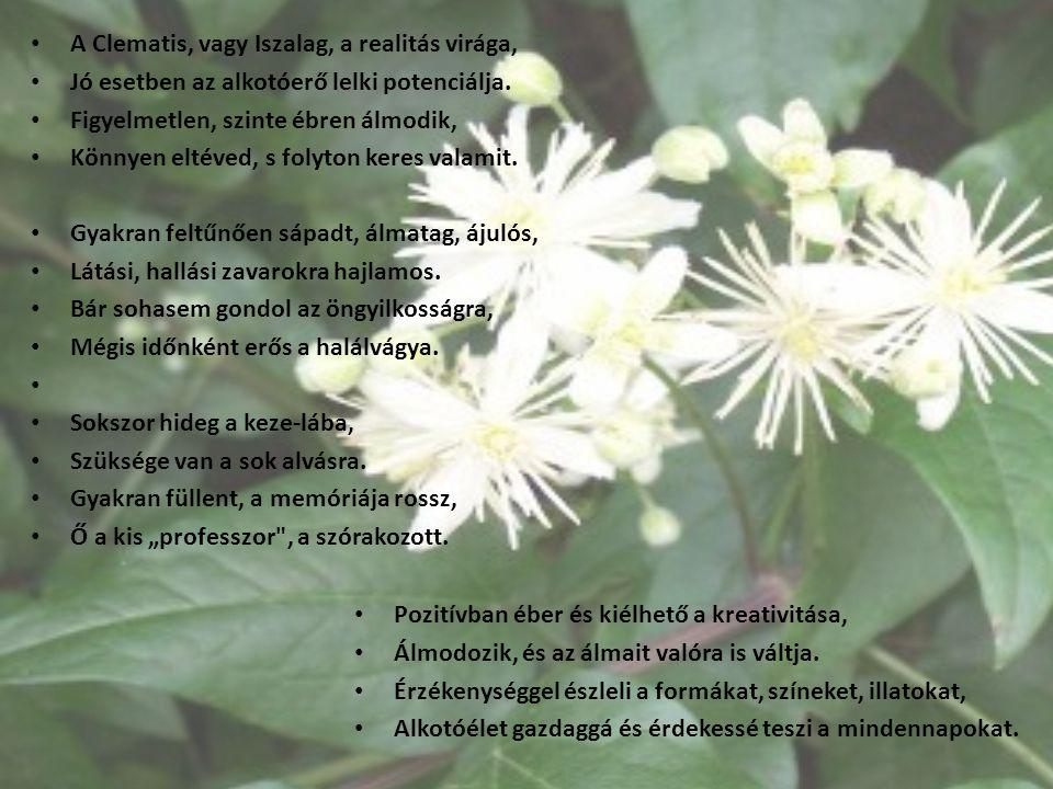 A Clematis, vagy Iszalag, a realitás virága,