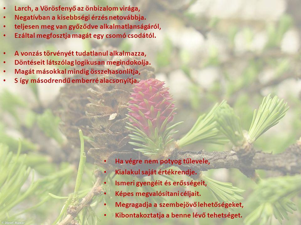 Larch, a Vörösfenyő az önbizalom virága,